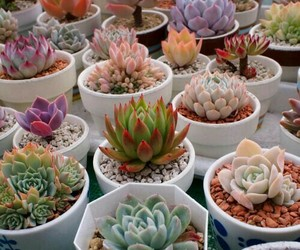 succulents and narure image