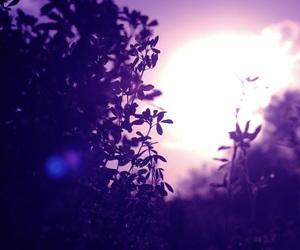 aesthetic, photography, and purple haze image