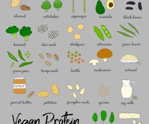 protein and vegan image