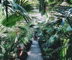 green, nature, and summer image
