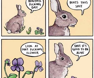 bunny, hilarious, and 2017 image