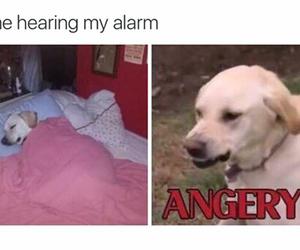 angry, humor, and morning image