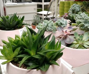 ikea, plants, and succulents image
