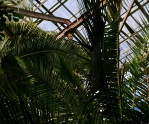 botanical garden, palmtrees, and moscow image
