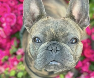 dog, flower, and pet image
