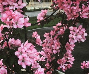 flower, mood, and pink image