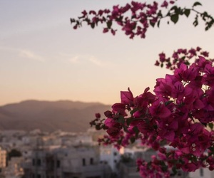 city, flowers, and sun image