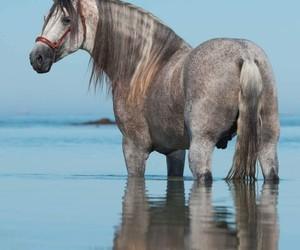 caballo, caballos, and horse image