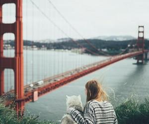 bridge and photography image