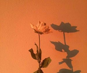orange, flowers, and aesthetic image