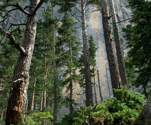 tree, forrest, and mountains image