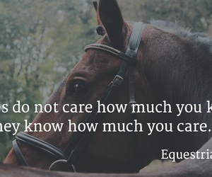 equestrian, horse, and quote image