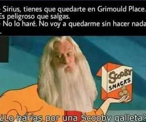books, dumbledore, and fun image