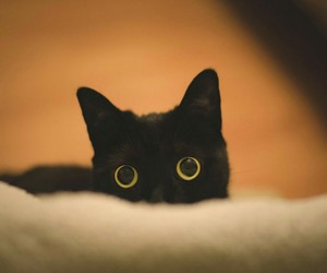 animals, black cat, and cats image