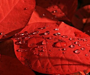 leaves, macro, and red image