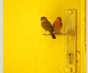 yellow, bird, and door image