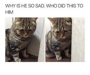 cat, sad, and funny image