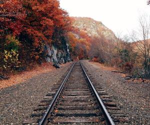 autumn and fall image