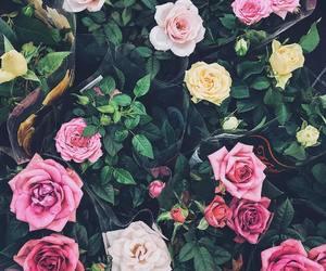 bloom, botanical, and floral image