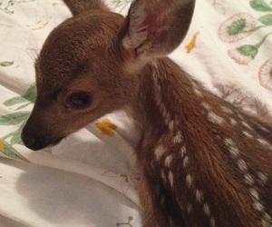 animal, cute, and bambi image
