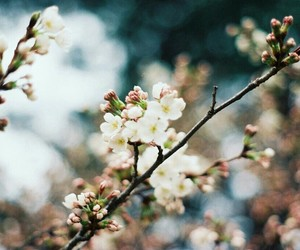 flowers, nature, and blossom image