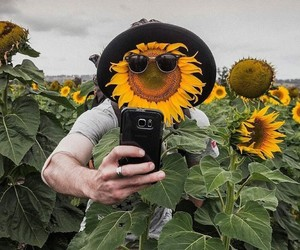 nature, sunflower, and travel image