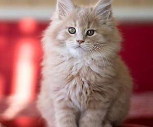 animals, kitties, and meow image