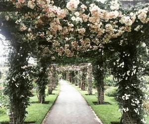 beautiful, botanical, and flowers image
