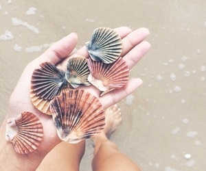 beach, coquillages, and summer image