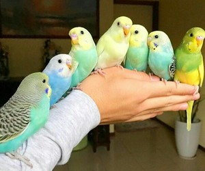 beautiful, birds, and parrots image