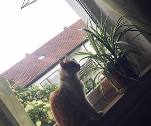 cat, plants, and tree image