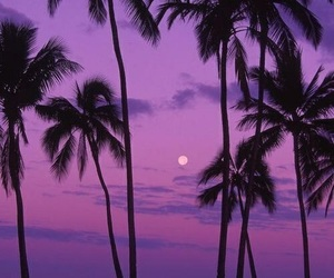 purple and summer image