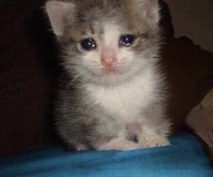 sad, cat, and crying image