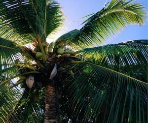 adventure, beach, and palmtrees image