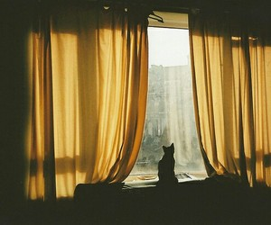 cat, photography, and window image