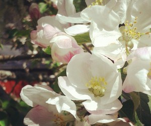 flowers, summer, and appletree image