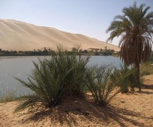 desert, palms, and theme image