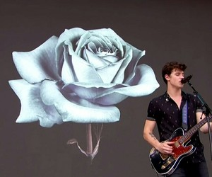rose, illuminate, and shawnmendes image