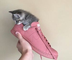 cat, shoes, and cute image