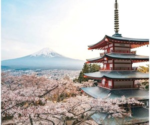 architecture, cherry blossom, and south korea image