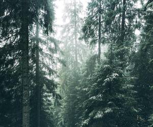 beautiful, forest, and photography image