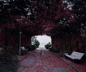 beautiful, bench, and photography image