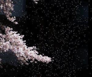 night, sakura, and stars image