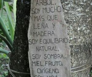 arbol and naturaleza image