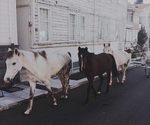 black, horse, and horses image