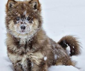 puppy, snow, and wolf image