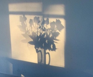 flowers, shadow, and rose image