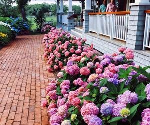 beauty, nice, and flowers image