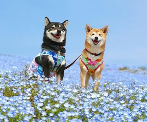 dogs and flowers image