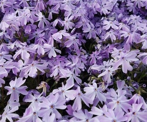flowers, lilac, and aesthetic image
